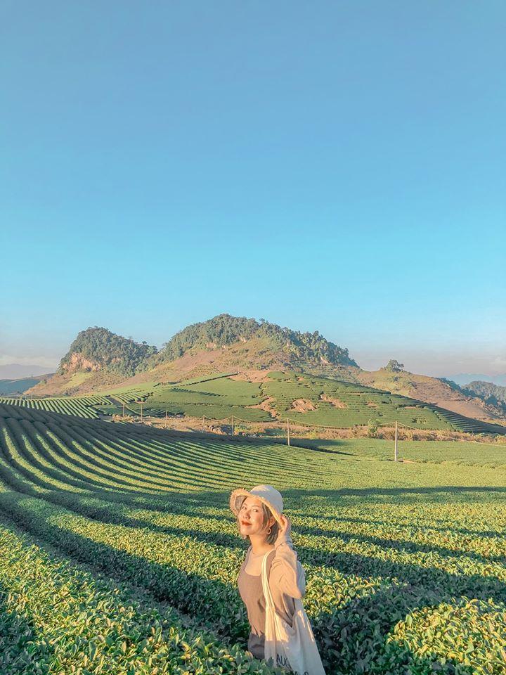 Những đồi chè xanh mát ở Mộc Châu. Hình: Sưu tầm