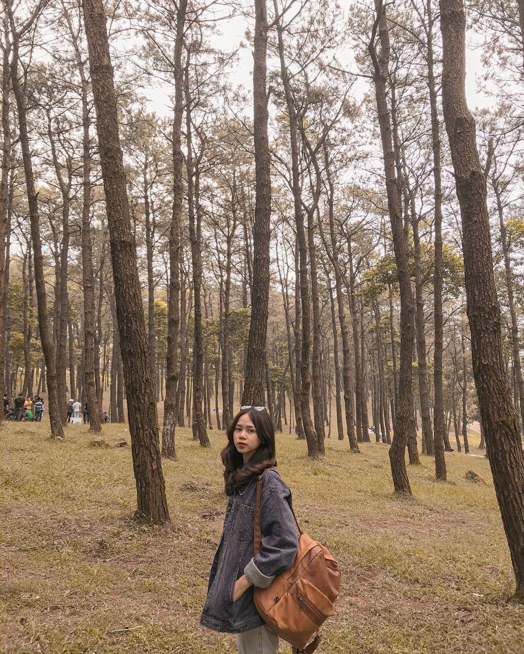 Nhiều khu rừng thích hợp để bạn cắm trại. Hình: @thuynhung141199