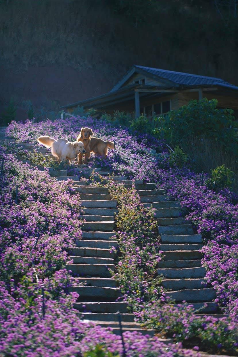 Khung cảnh yên bình ở vườn hoa. Hình: Sưu tầm