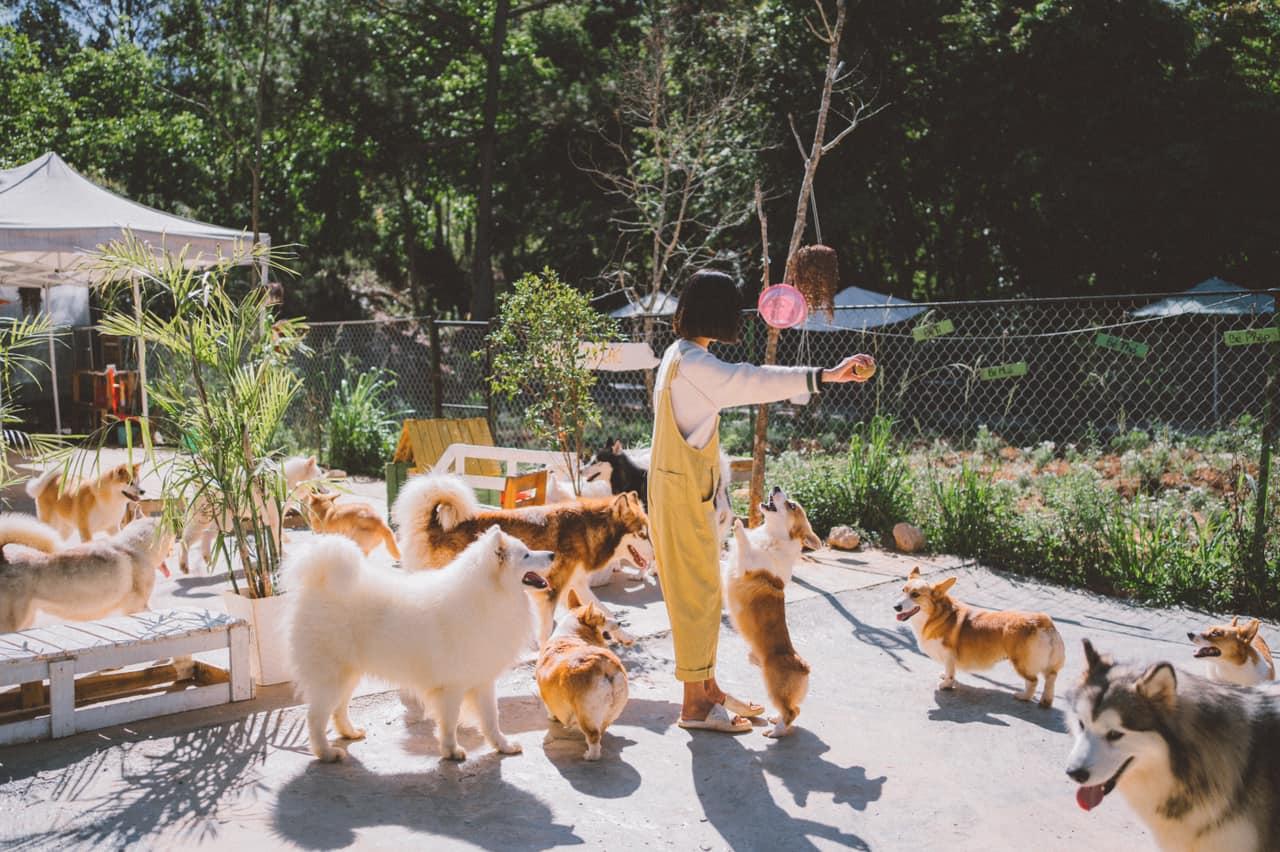 Nhà của DOG garden. Hình: Sưu tầm