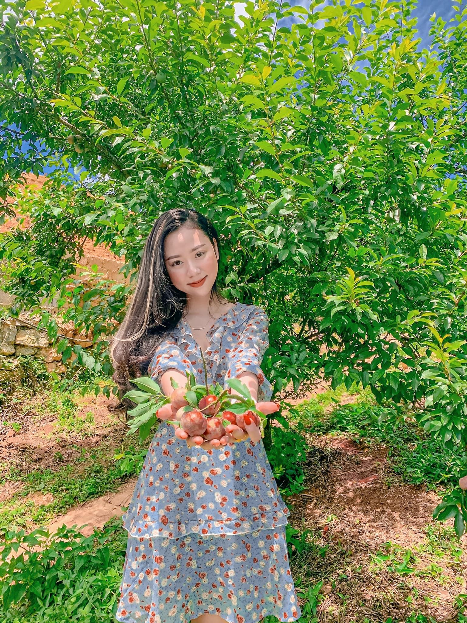 Tháng 5, 6 là mùa mận chín ở Mộc Châu. Hình: NhatHa Phan