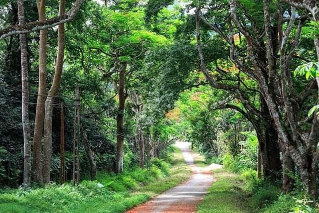 Vườn quốc gia Cúc Phương là điểm đến được nhiều du khách lựa chọn