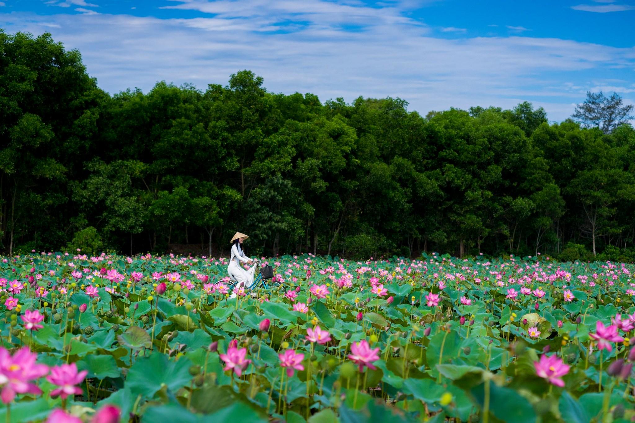 Đầm sen ở huyện Quảng Điền. Hình: Kelvin Long