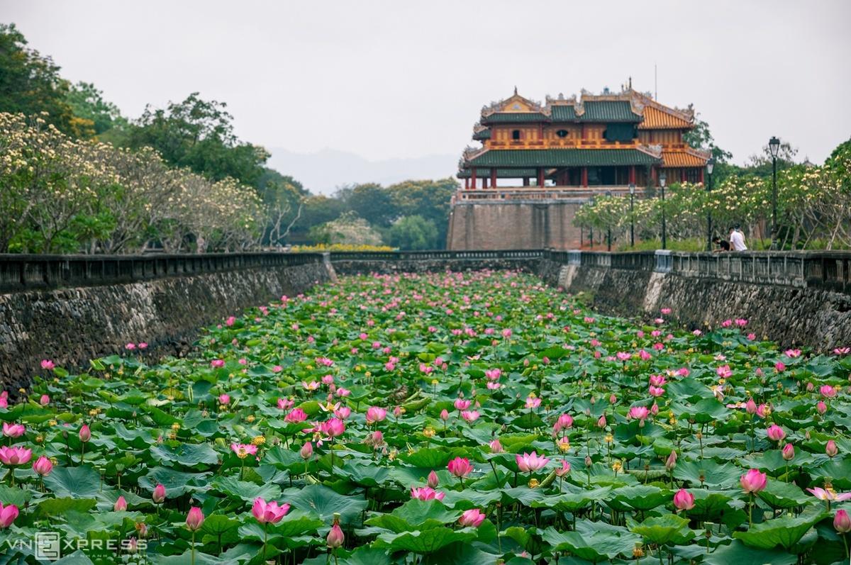 Sen ở Đại Nội. Hình: Nguyễn Phong