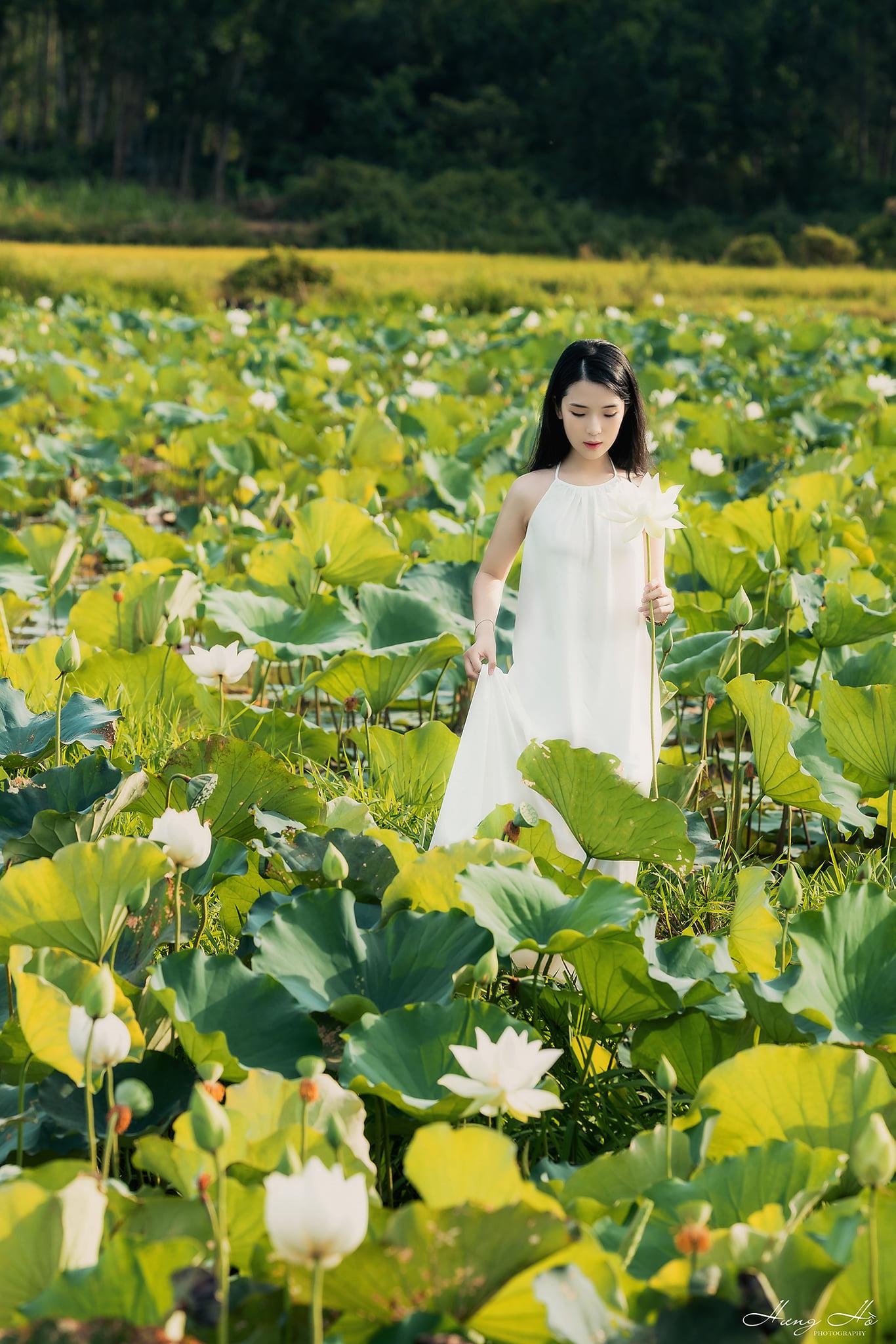 Hoa sen trắng. Hình: Hưng Hồ