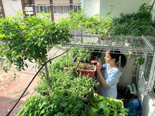 Tận dụng khoảng không gian trong nhà để trồng rau xanh mùa dịch. Ảnh: Internet