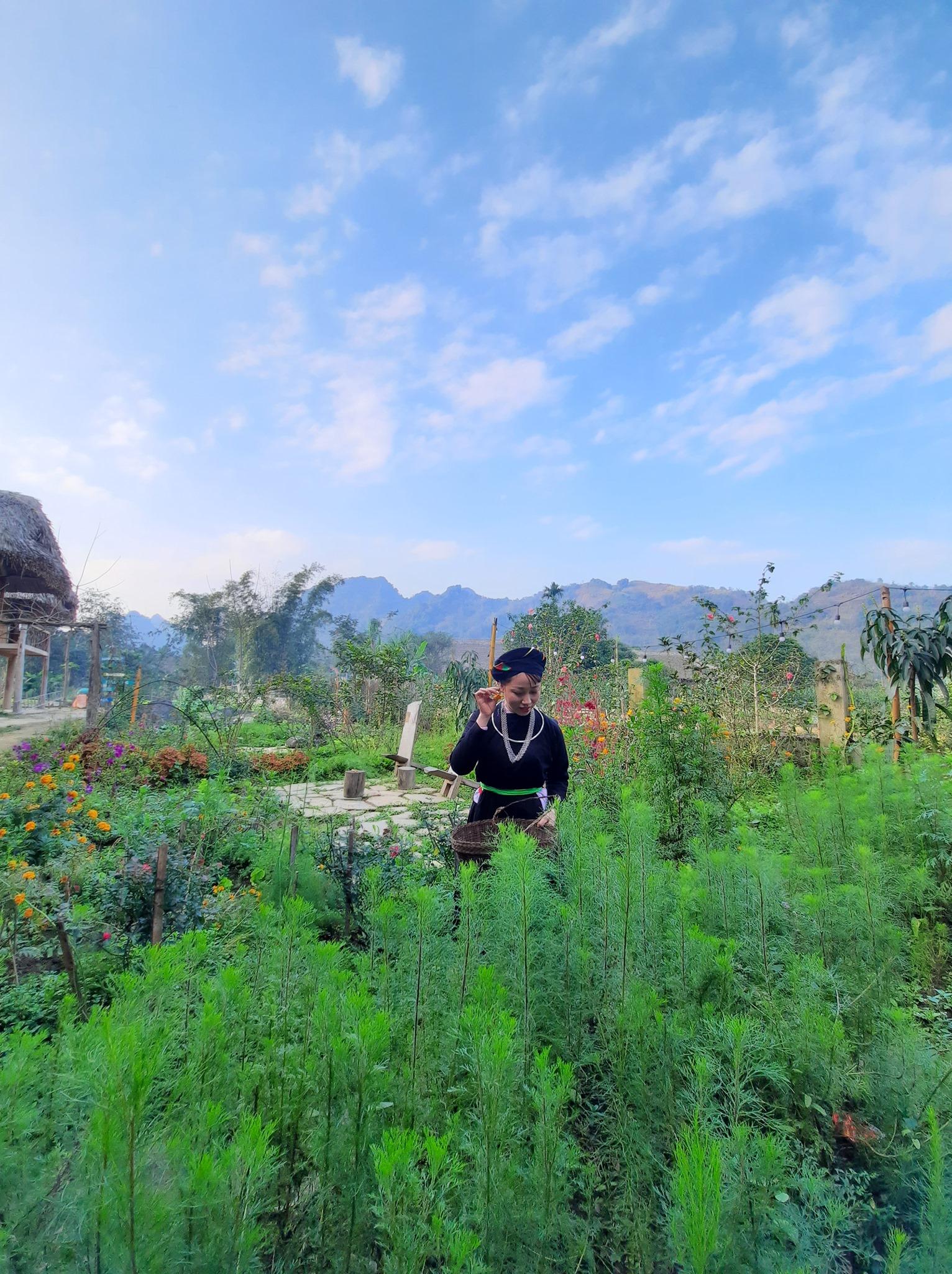 Vườn rau xanh ngắt ở Xoi Farmstay. Hình: Sưu tầm