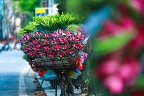 Hà Nội 12 mùa hoa