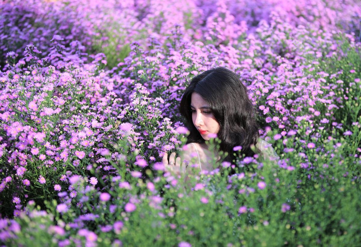 Vườn hoa thạch thảo tím. Hình: Sưu tầm