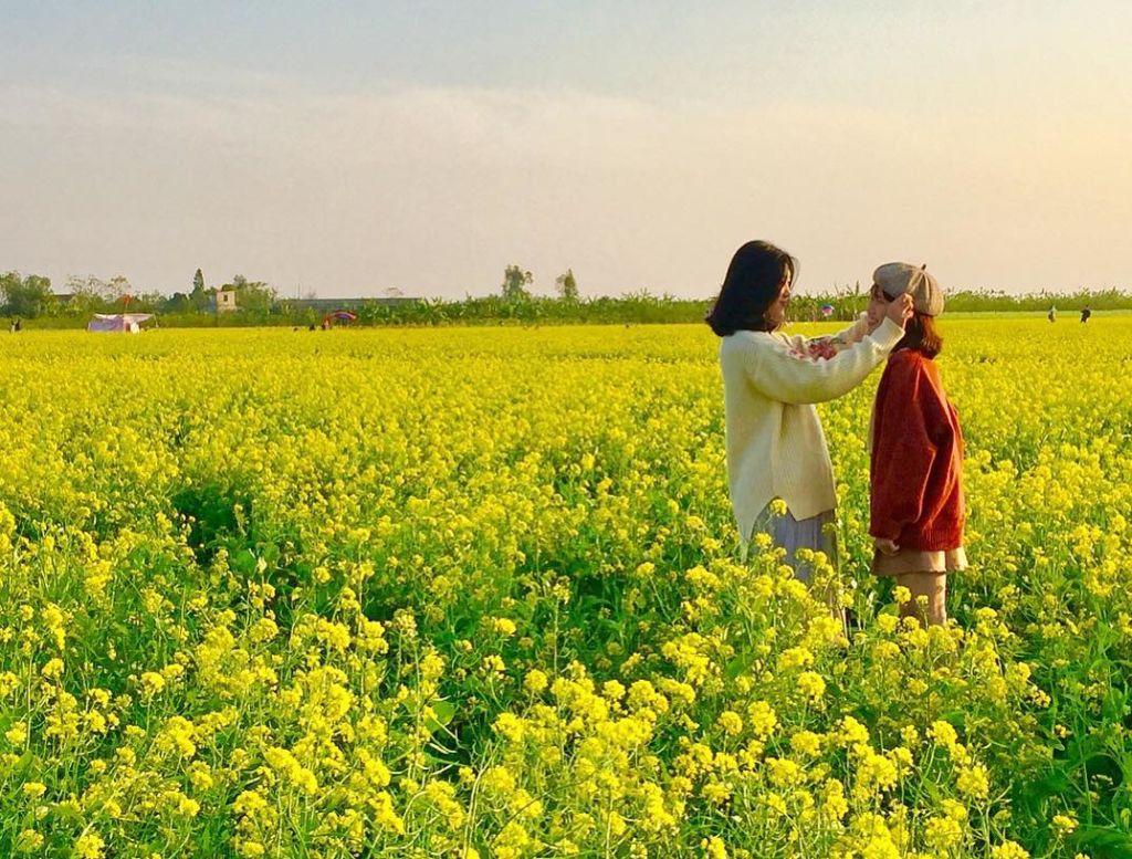 Mùa hoa cải vàng Hà Nội. Hình: Sưu tầm