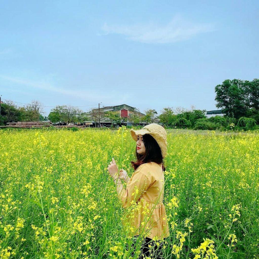 Vườn hoa cải vàng. Hình: Sưu tầm