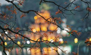 Mùa thu Hà Nội và những trải nghiệm mà bạn nhất định không được bỏ lỡ