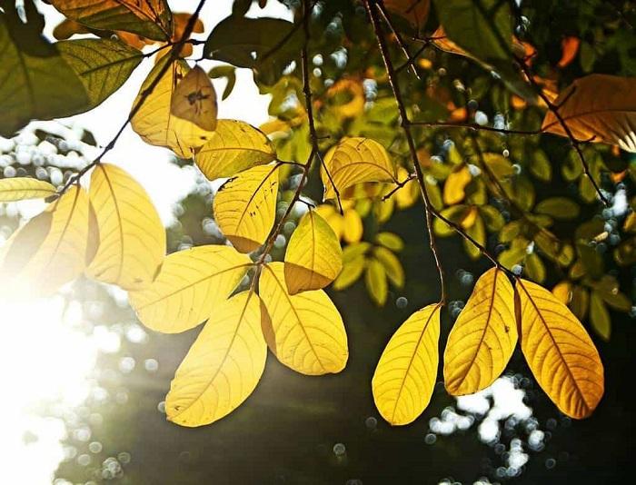 mùa thu hà nội