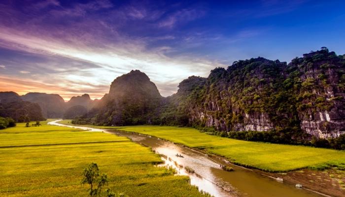 Sông Thu Bồn mùa lúa chín. Ảnh: dulichninhbinh